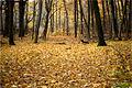 Парасоцький ліс 2.jpg