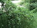 Парк шума Гази Баба во мај (96).JPG