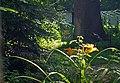 Полтава, Першотравневий проспект, 10 2 дуба на території аграрного коледжу. P1230784.jpg