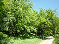 Полтава Парк аграрного технікуму 3.jpg