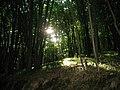 Промінь світла під покривом лісу.jpg