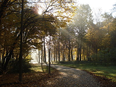 Ранок у лісі восени.JPG