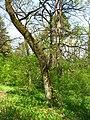 Територія проектованого заказника Чернечий ліс у 2007 році (7).jpg