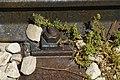 רכבת העמק - מעבירי מים והסוללה - צומת העמקים - עמק יזרעאל והגלבוע (77).JPG