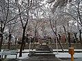 نمای بیرونی ساختمان گل گلاب در دانشگاه اراک - panoramio.jpg