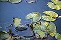 گیاهان در پاییز - باغ بوتانیکال تفلیس 02.jpg
