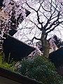 明保野亭 Akebonotei Inn - panoramio (2).jpg