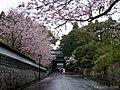 桜の飫肥城 (Obi Castle with Cherry blossoms) 29 Mar, 2014 - panoramio.jpg