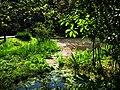 植物園濕地區 Wetland in Botanical Garden - panoramio.jpg