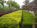 石头城遗址公园风景 - panoramio.jpg