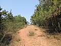 雨母山 - panoramio (13).jpg
