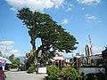 02584fvfBarangays Poblacion Stephen Academy Church Town Laur Nueva Ecijafvf 02.JPG