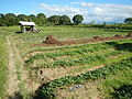 0581jfLandscapes Roads Vegetables Fields Binagbag Angat Bulacanfvf 28.JPG