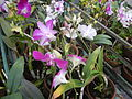 0917jfMaharlika Highway Resorts Orchids Handicrafts San Rafael Bulacanfvf 09.JPG