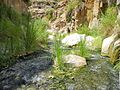 12 Wadi Bin Hammad Tropical Rain Forest Trail - It Is a Green Valley - panoramio.jpg