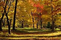 131103 Hokkaido University Botanical Gardens Sapporo Hokkaido Japan18o.jpg