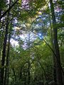1461981 Wooded-area-in-Mecklenburg-County 620.jpg