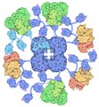 153-PyruvateDehydrogenaseComplex pyruvatedehydrogenase.tif