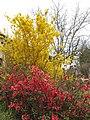 198 Plantes florides al camí de la Vall (Alpens).jpg