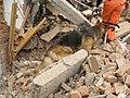 2008년 중앙119구조단 중국 쓰촨성 대지진 국제 출동(四川省 大地震, 사천성 대지진) IMG 5981.JPG