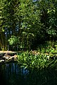 2008-07-24 Lily pond at Duke Gardens 1.jpg