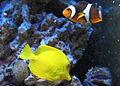20080113 Aquatopia - Rivierenhof (098).jpg