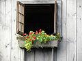 2009 windowbox PlymouthMA 3812266068.jpg