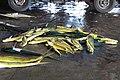 2010 07 13780 6438 Chenggong Chenggong Fishing Harbor Taiwan.JPG