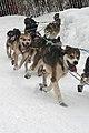 2012 Iditarod (6804407386).jpg