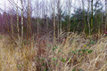 2018-12-22-December-watercolors.-Hike-to-the-Ratingen-forest. File-03.png