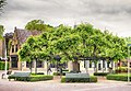 2021 The ancient Mother-Tree NL.jpg
