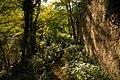 21 Racó verd vora el Fluvià, a Castellfollit de la Roca.jpg