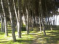 2635 Rio de Mouro, Portugal - panoramio (2).jpg