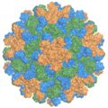 2tbv capsid ray.png