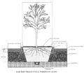 5Planting Island Detailx800.png