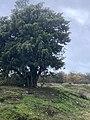 7397 Aekingerzand.Canada.Elsloo.Appelscha.Wilhelminahoeve.Natuurgebied.Landscape.jpg