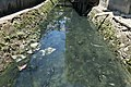 AA 2 polluted water Talisay City Cebu g.jpg