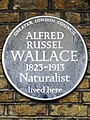 ALFRED RUSSEL WALLACE 1823-1913 Naturalist lived here.jpg