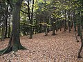 A Bed of Leaves - geograph.org.uk - 277633.jpg