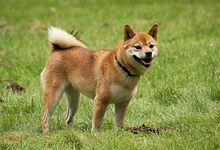 Dog Named Dingo