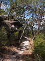 A bush walk trail along Berowra heights - panoramio.jpg