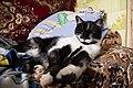 A cat in Ubezhenskaya-2014-04-13.jpg