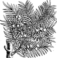 A compleat body of husbandry Fleuron T030997-57.png