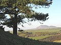 A conifer tree on the Pen-y-gaer ridge - geograph.org.uk - 639304.jpg