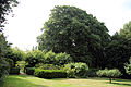 A hedge and tree bordered lawn Gibberd Garden Essex England.JPG