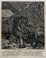 A hippopotamus with its young is attacked by a lion. Etching Wellcome V0020976.jpg