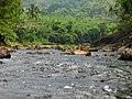 A stream in Konni, Kerala - Flickr - Dr. Santulan Mahanta.jpg