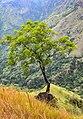 A tree in Little Adams peak.jpg