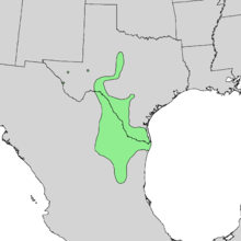 Acacia wrightii range map 1.png