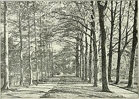 Actes du IIIme Congres international de botanique - Bruxelles 1910 ((1910)-(1912)) (16586340309).jpg